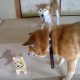 【わんこ動画】かわいい!おもちゃの犬と柴犬が仲良くなったその理由とは?