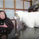 【わんこの癒やし動画】じわじわ笑える!秋田犬の無言の圧力