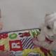 【わんこ動画】やさしくてほっこり♡赤ちゃんにおもちゃを貸してあげる優しい犬