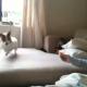 【わんこ動画】レモンとたたかう愛犬!面白い動きがかわいいけどちょっと心配