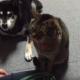 【わんことにゃんこ動画】まるでコント!お利口すぎる犬と猫のしつけ講座