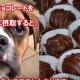 【注意】犬にチョコレートはNG!もしあげてしまうと…