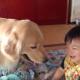 ベビーシッター犬にブラッシング!癒されるわんこ動画 2連発♪