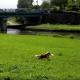 【わんこ動画】河川敷で遊ぶ、とってもお利口なボーダー・コリー!